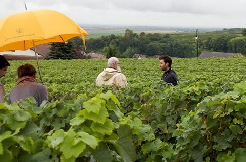 Veuve Clicquot - le vigne