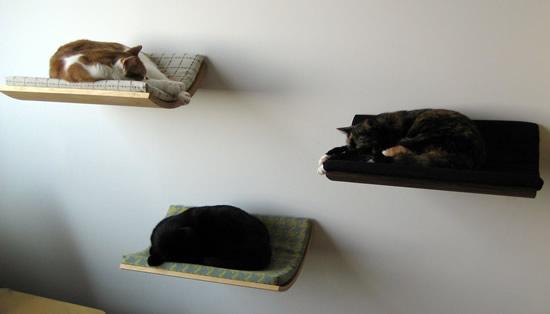 Curve: e i gatti dormono appesi alla parete