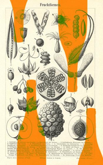 vinobouquet