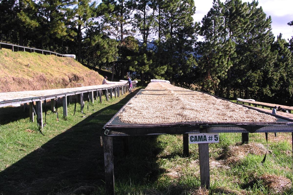 Panama 2009 essicazione su african beds