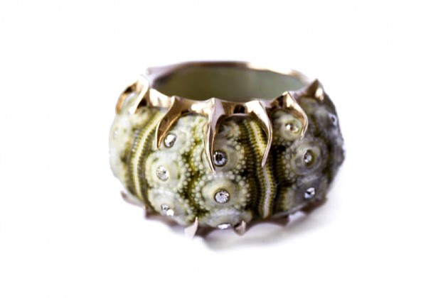 shagreen_and_tortoise_1