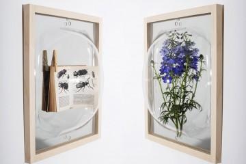 showcase_mirror_0