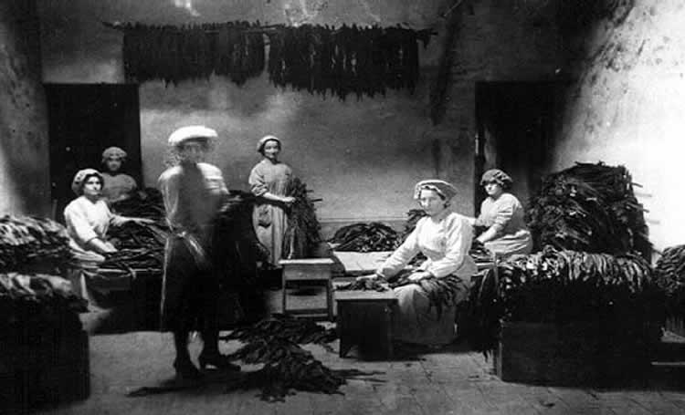 Foto d'epoca dall'archivio del Museo Storico Scientifico del Tabacco di San Giustino Umbro (Pg)