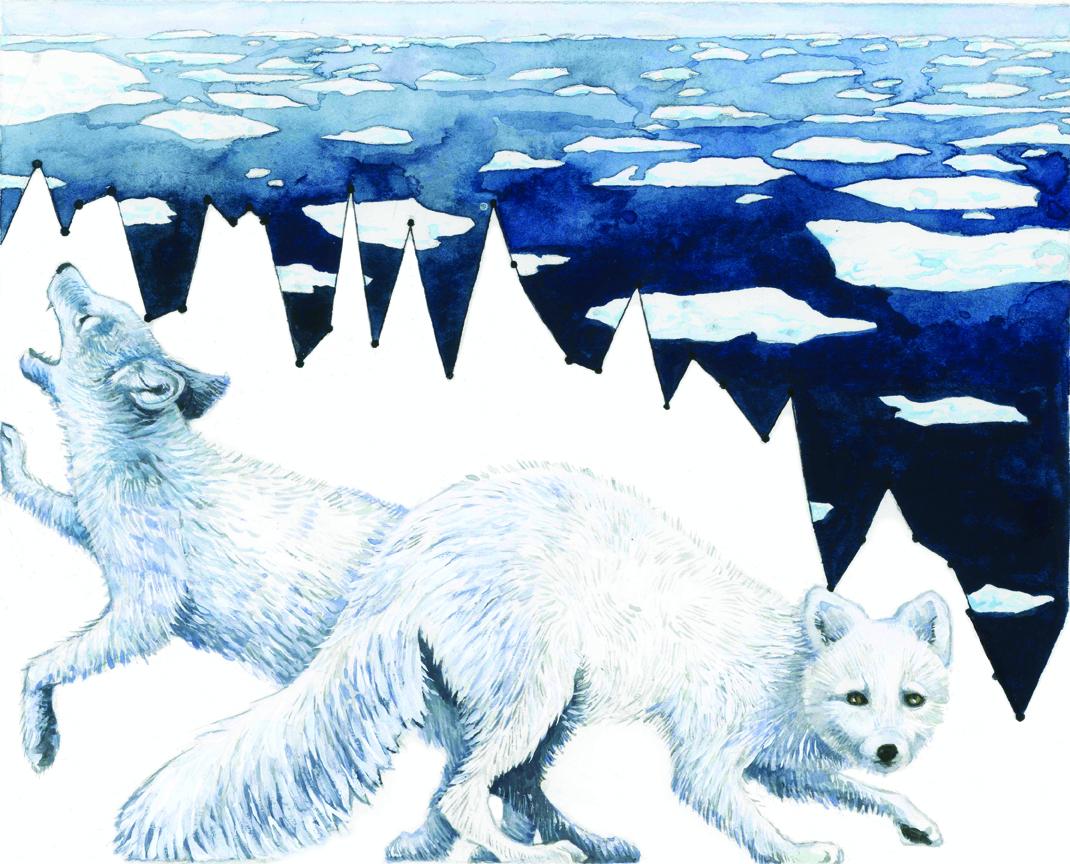 La riduzione dei ghiacciai mette in pericolo specie come la volpe artica (© Jill Pelto)