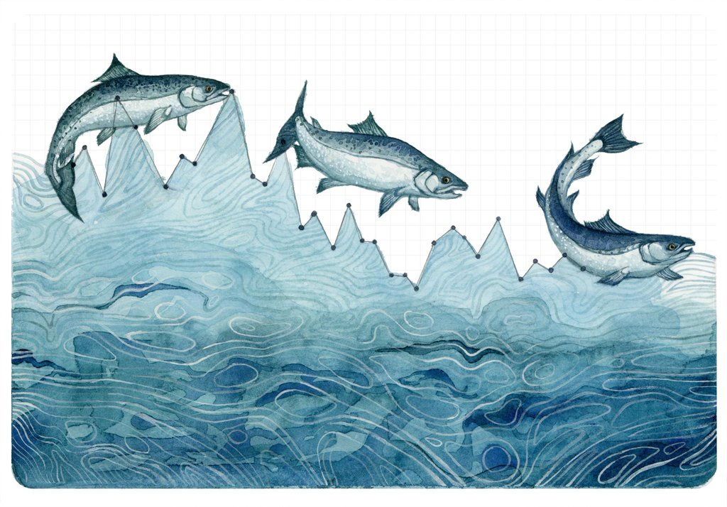 La diminuzione della popolazione dei salmoni (© Jill Pelto)