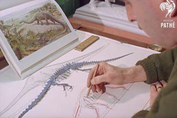 Hayward al lavoro sul modellino di un Diplodocus