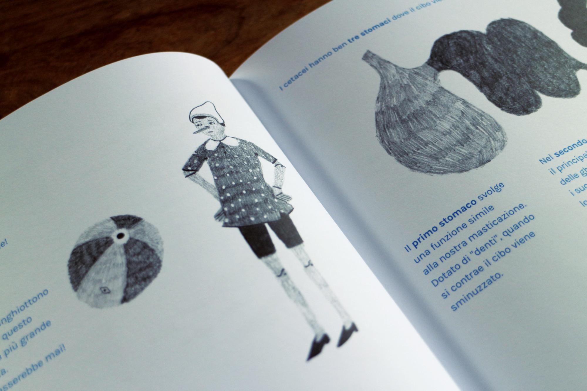 un libro sulle balene antinori 11