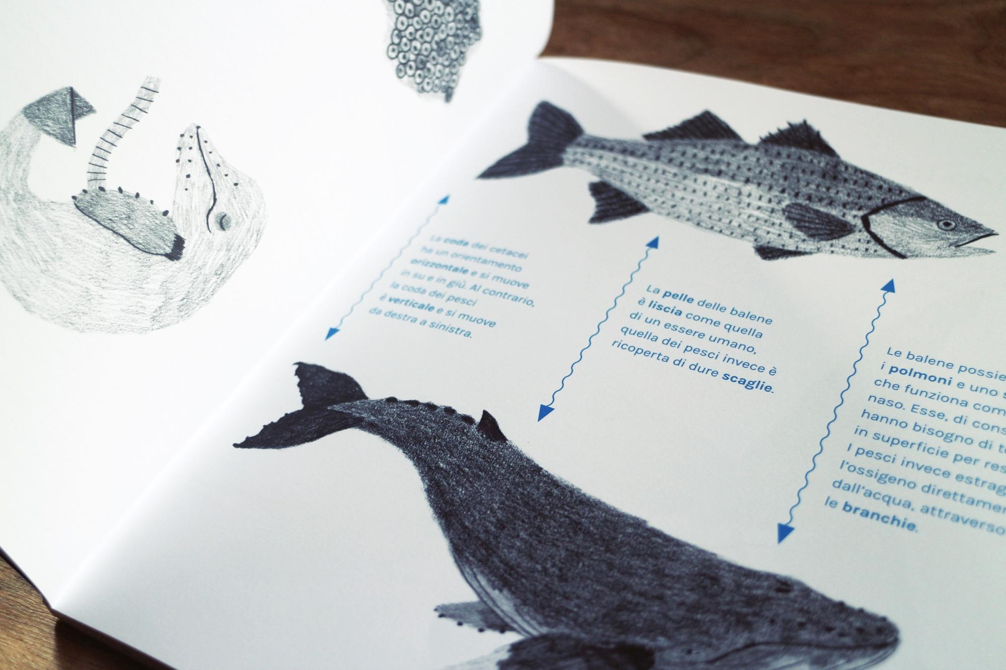 un libro sulle balene antinori 6