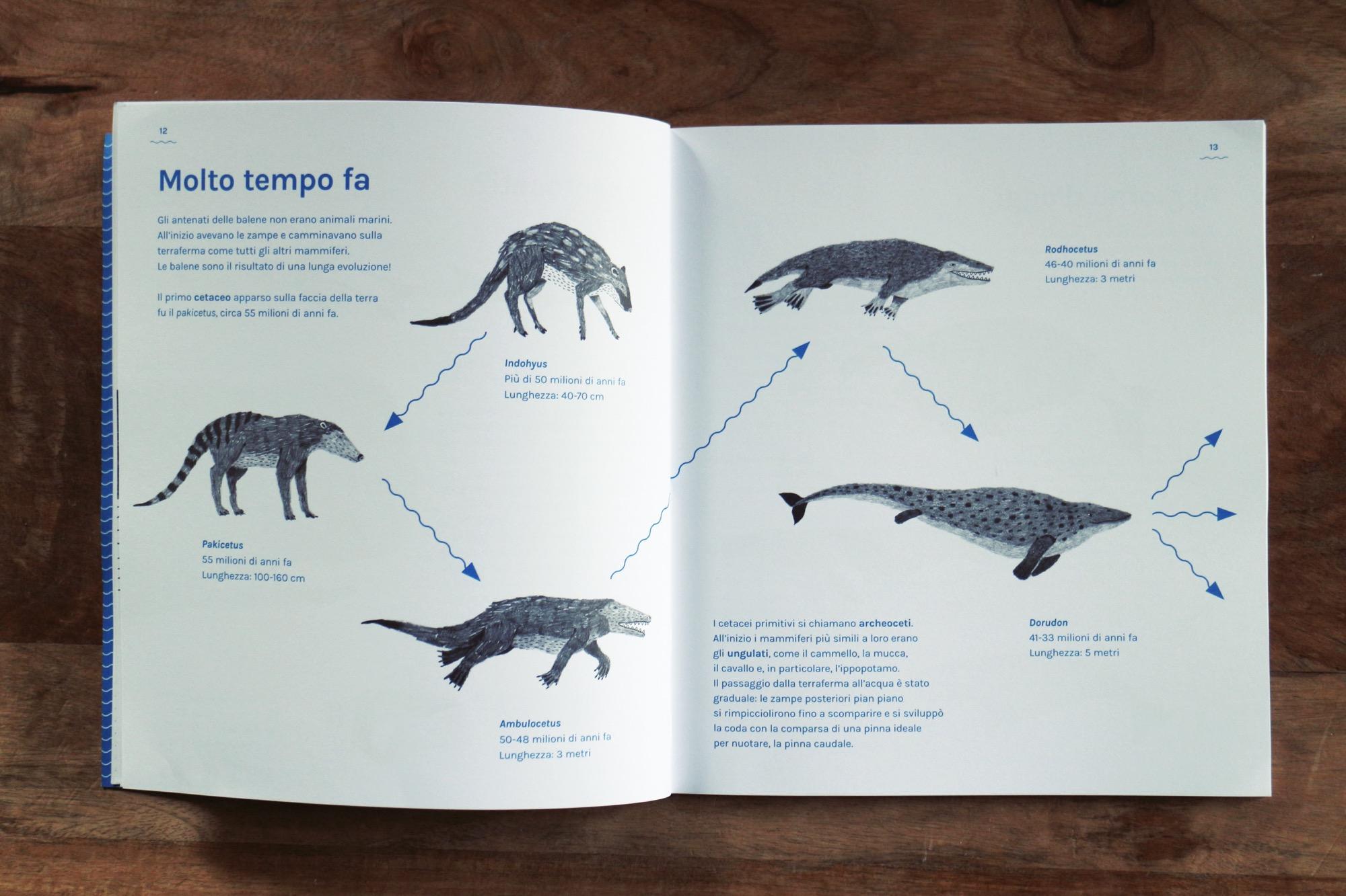un libro sulle balene antinori 8