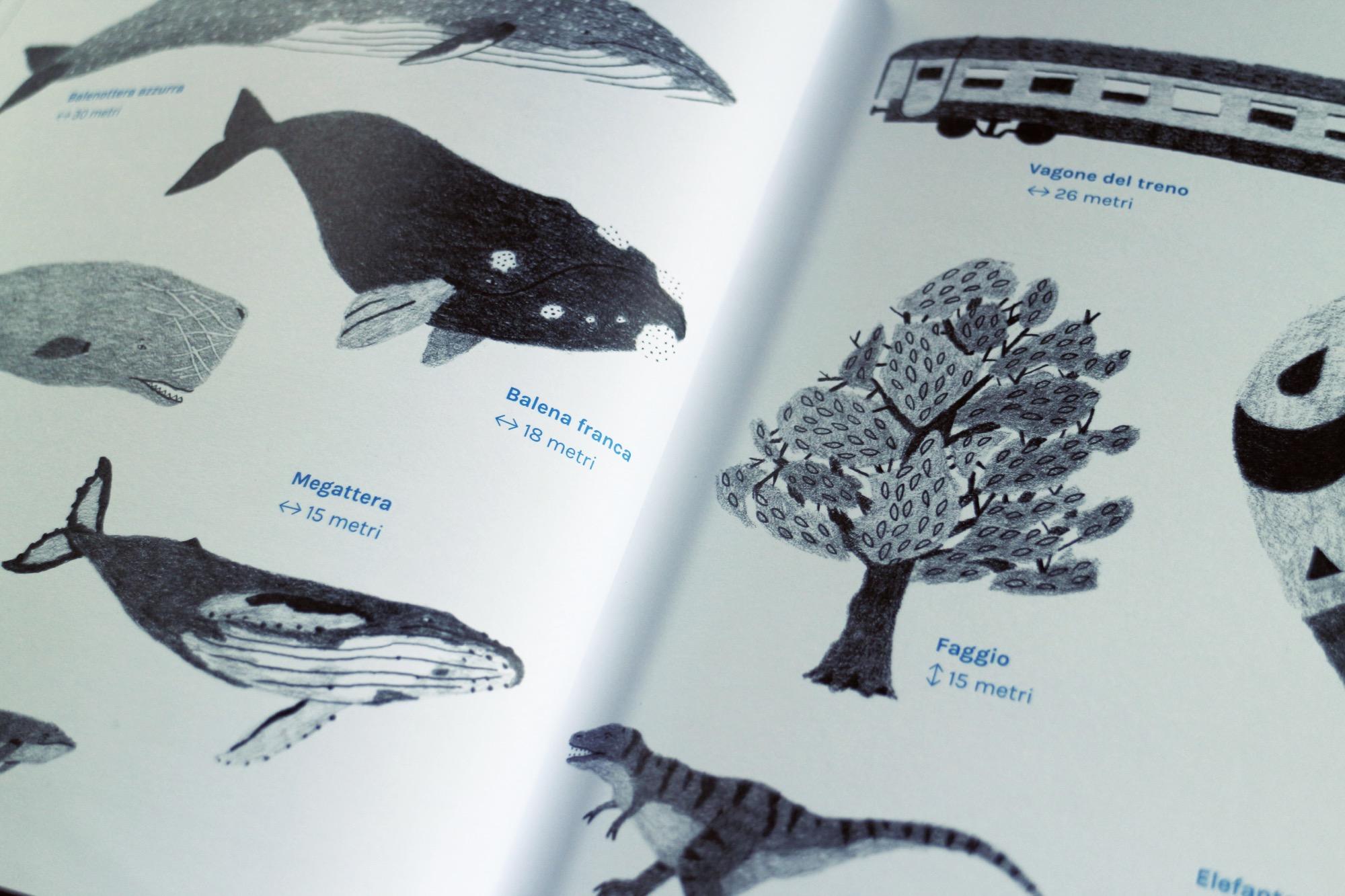 un libro sulle balene antinori 9