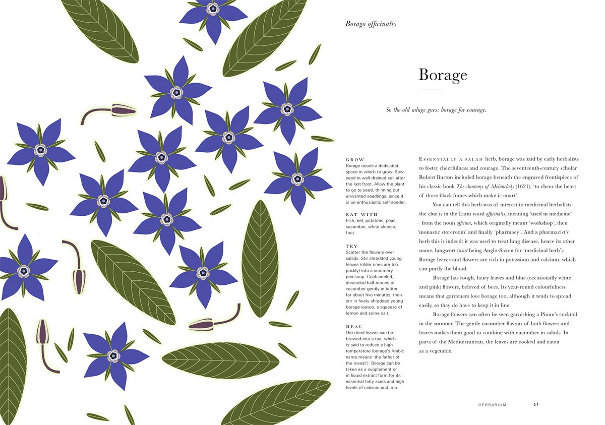 here_design_herbarium_9