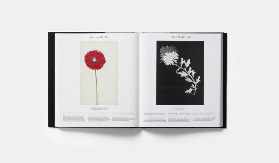 """""""Plant: Exploring the Botanical World"""", Phaidon, 2016"""