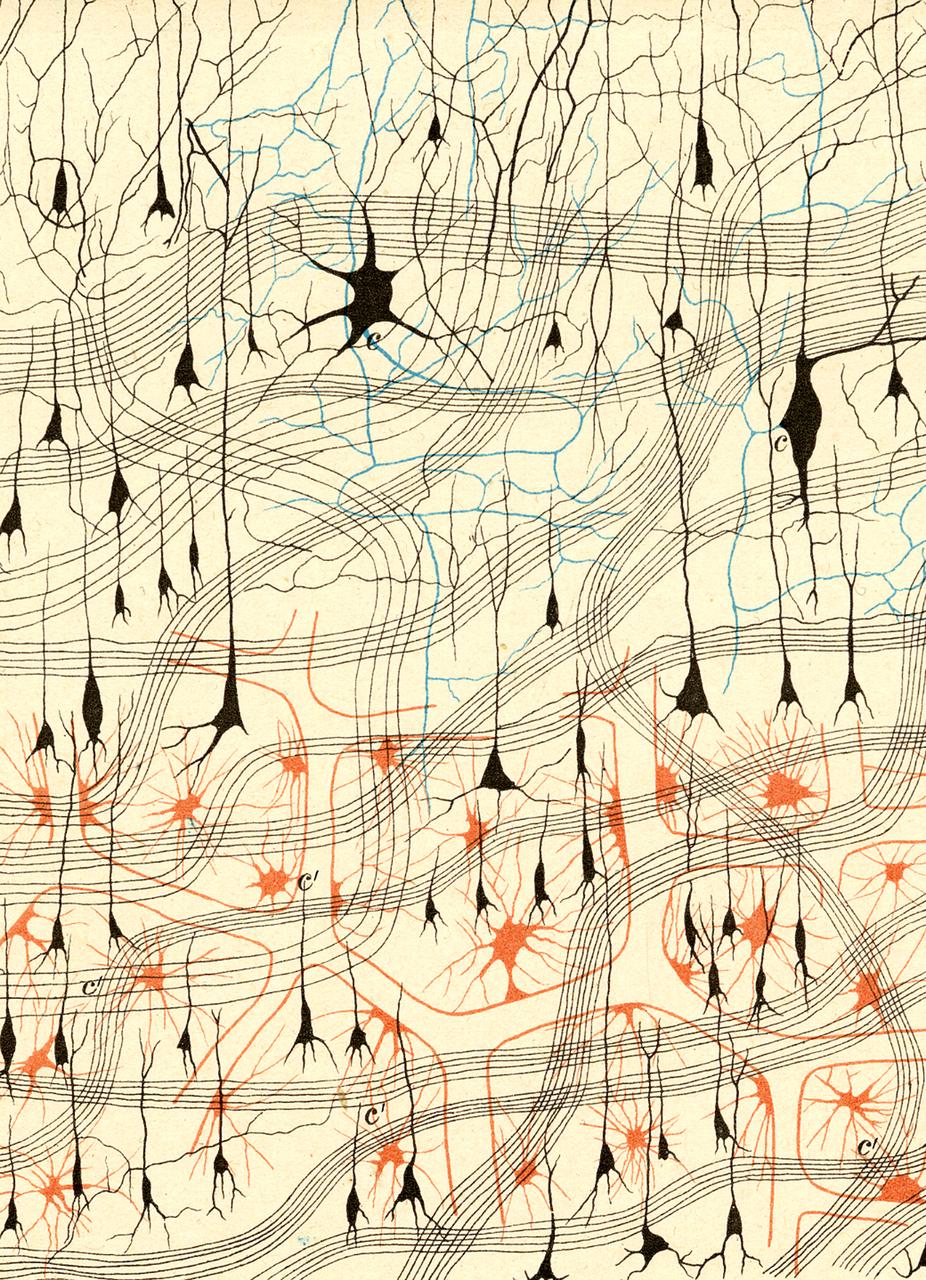 """Cellule nervose. Tavola tratta da """"Sulla fina anatomia degli organi centrali del sistema nervoso. Studi."""", Reggio Emilia, tipografia di Stefano Calderini e figlio, 1885, di Camillo Golgi (1843-1926)"""
