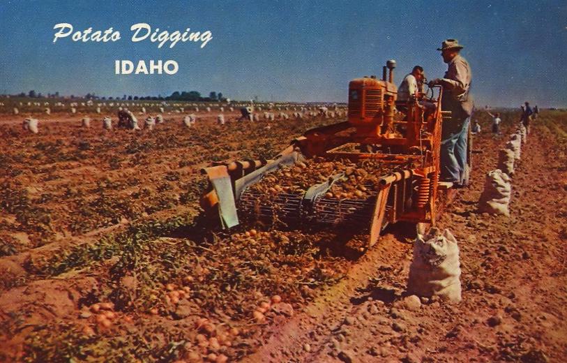 Potato Digging, Idaho (courtesy Bad Postcards)