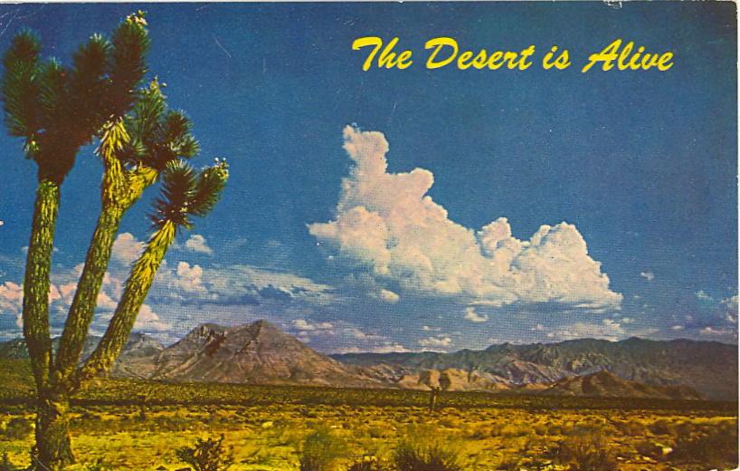 The desert is alive (courtesy Bad Postcards)