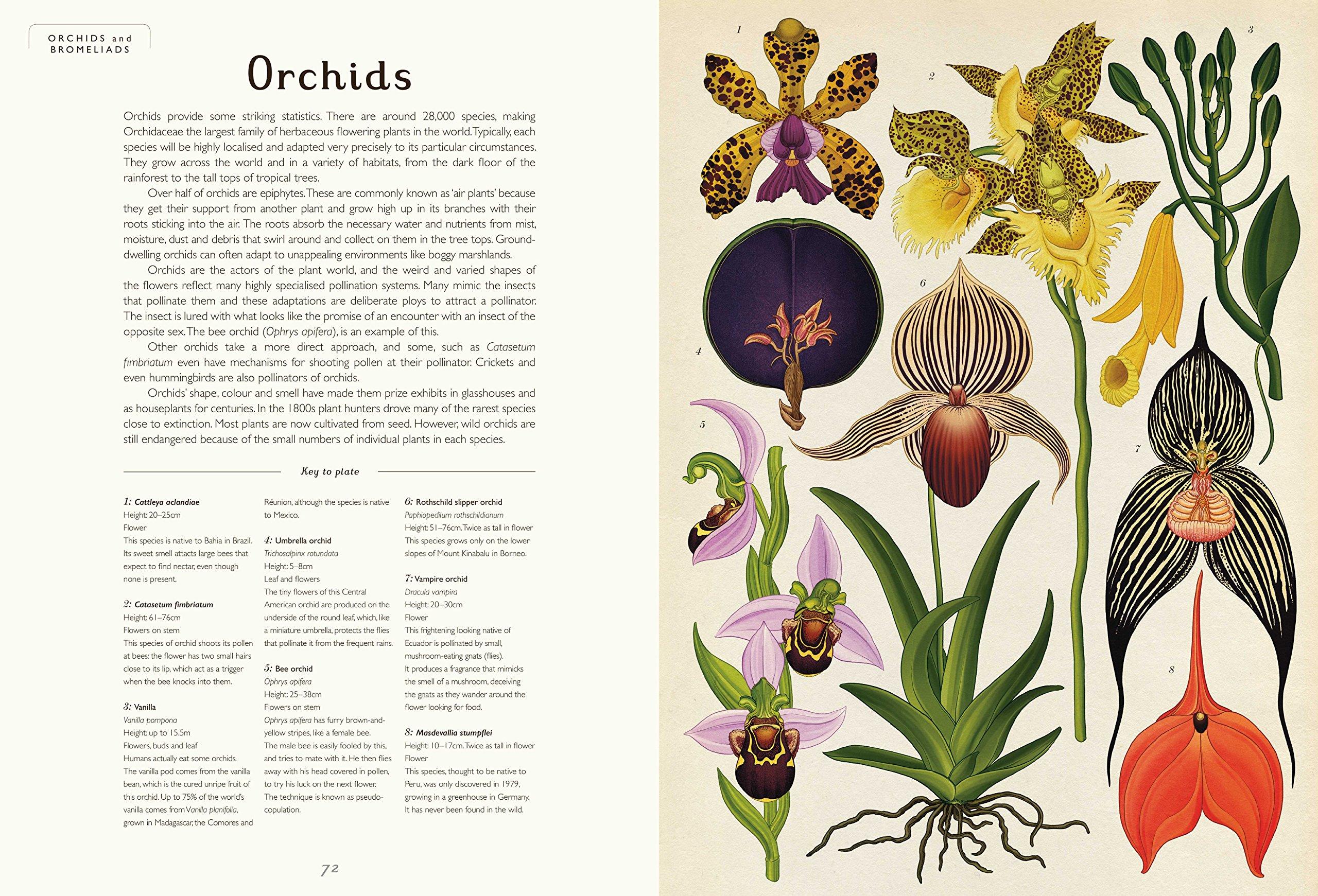 botanicum 5