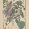 La plante et ses applications ornementales 19