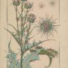 La plante et ses applications ornementales 23