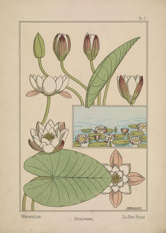 La plante et ses applications ornementales 4