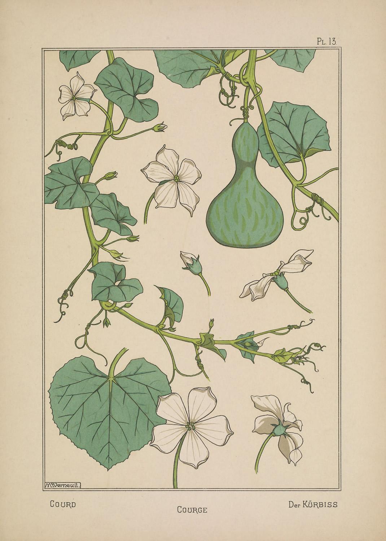 La plante et ses applications ornementales 8