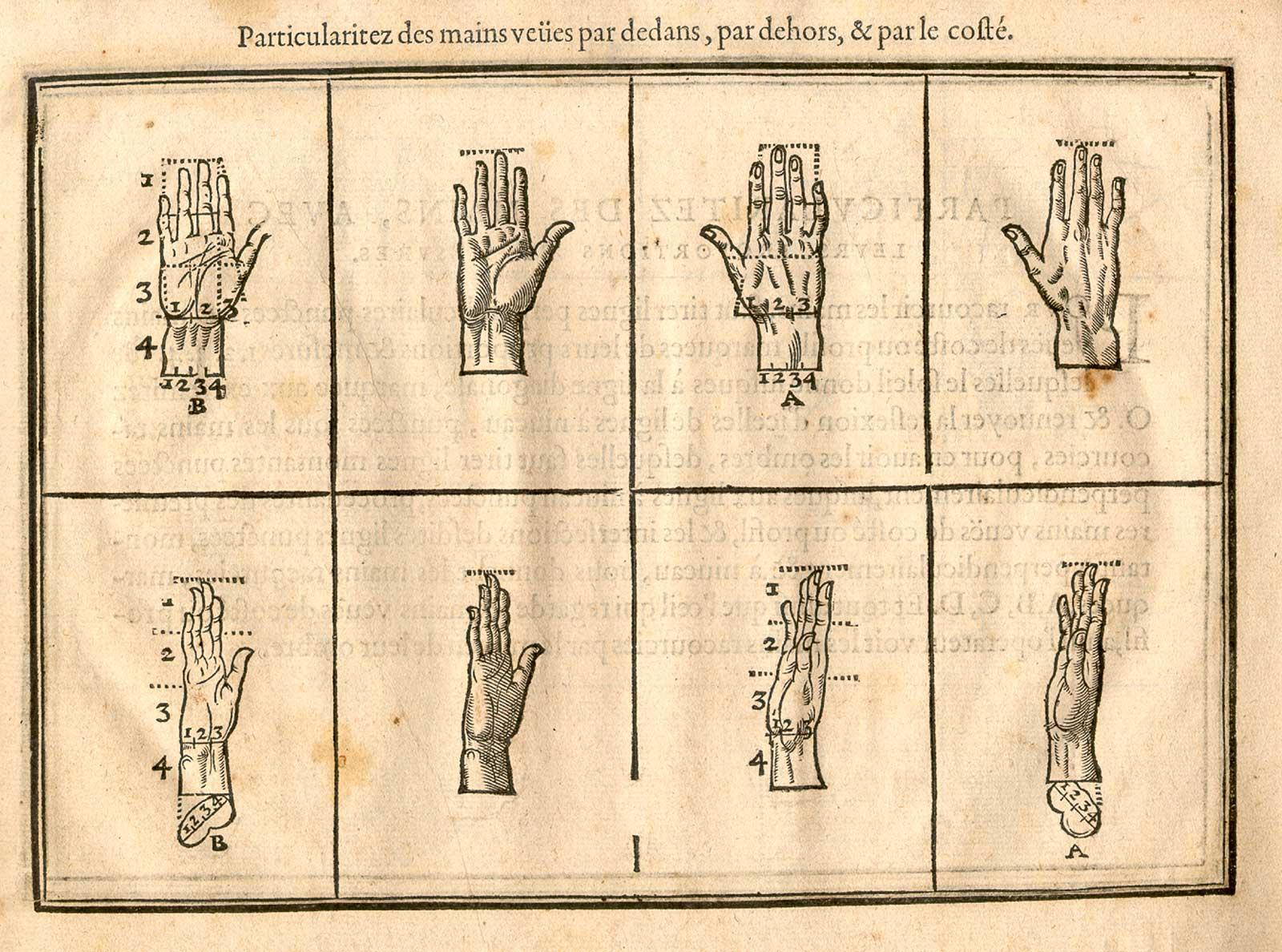 anatomia 10