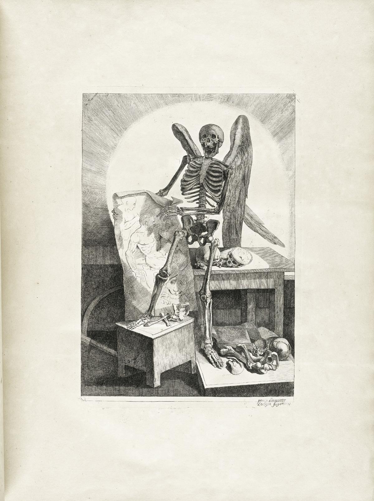 anatomia 14