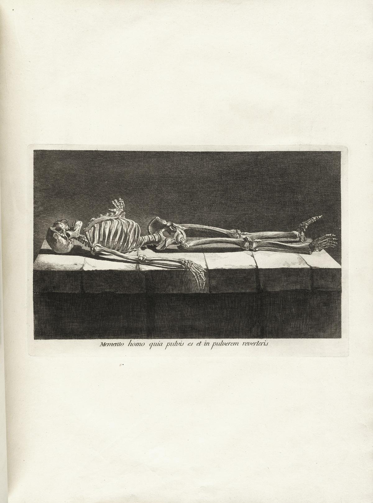 anatomia 15