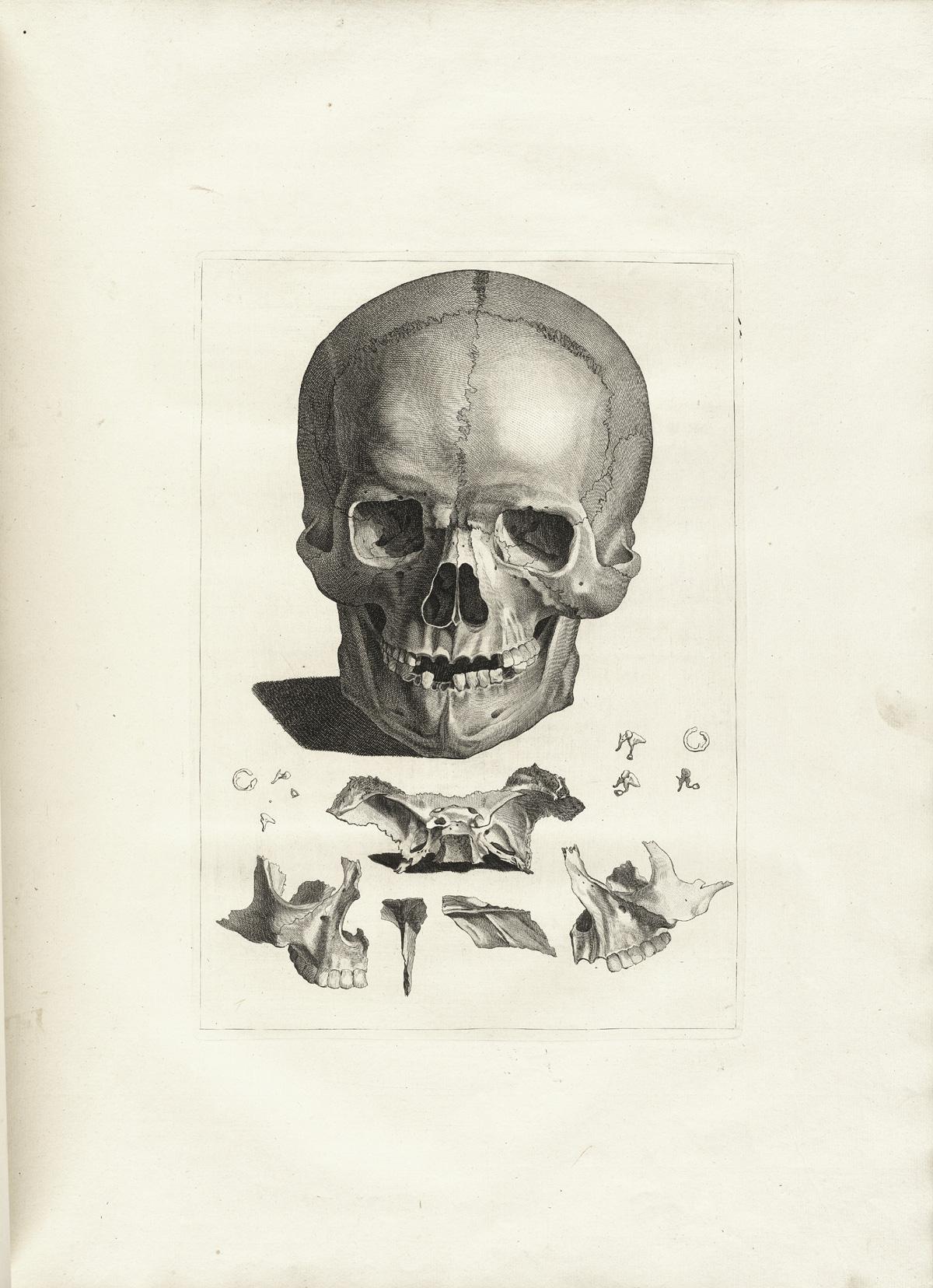 anatomia 16