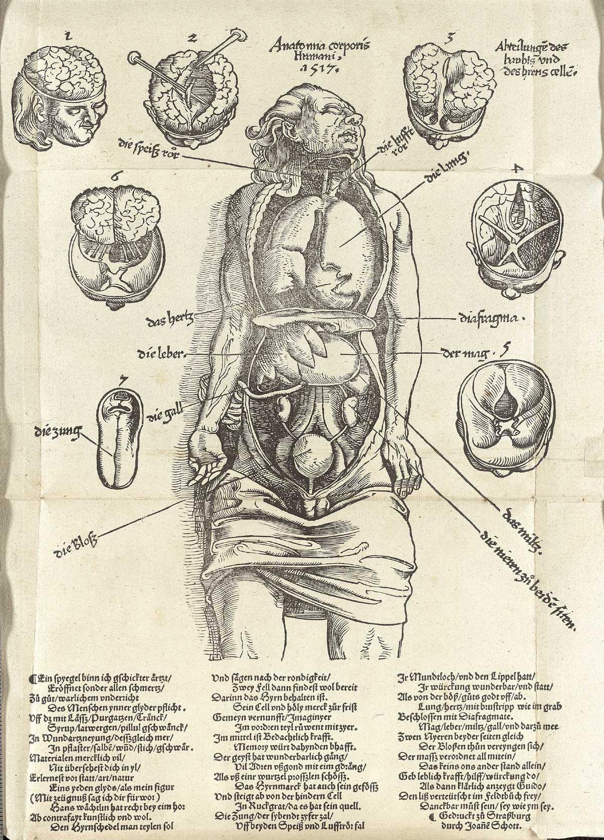 anatomia 19