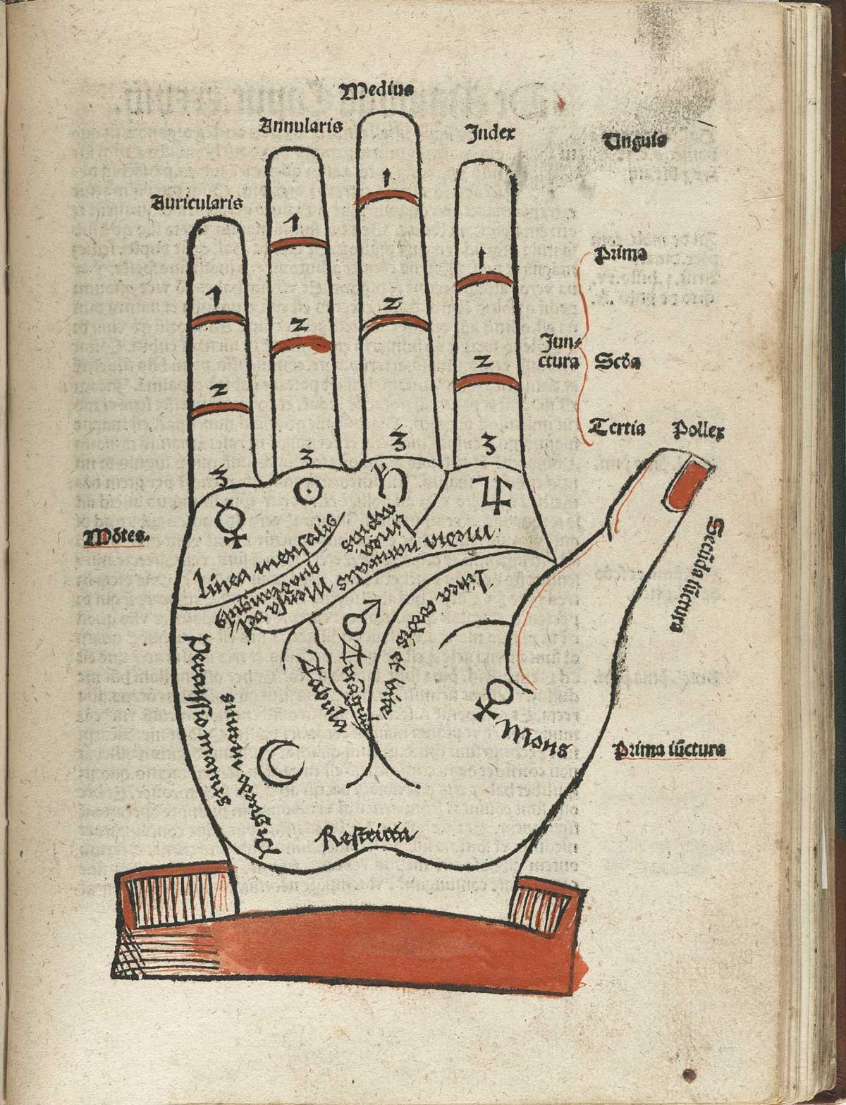 anatomia 24
