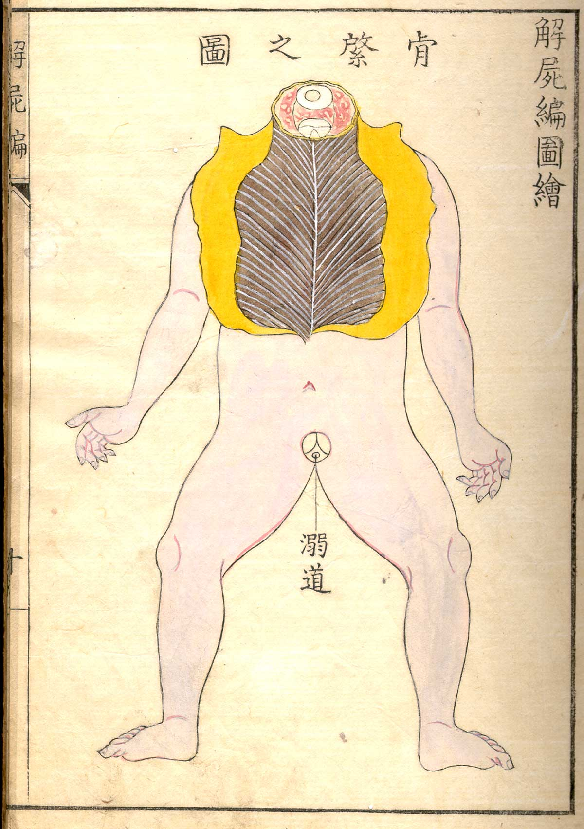 anatomia 25