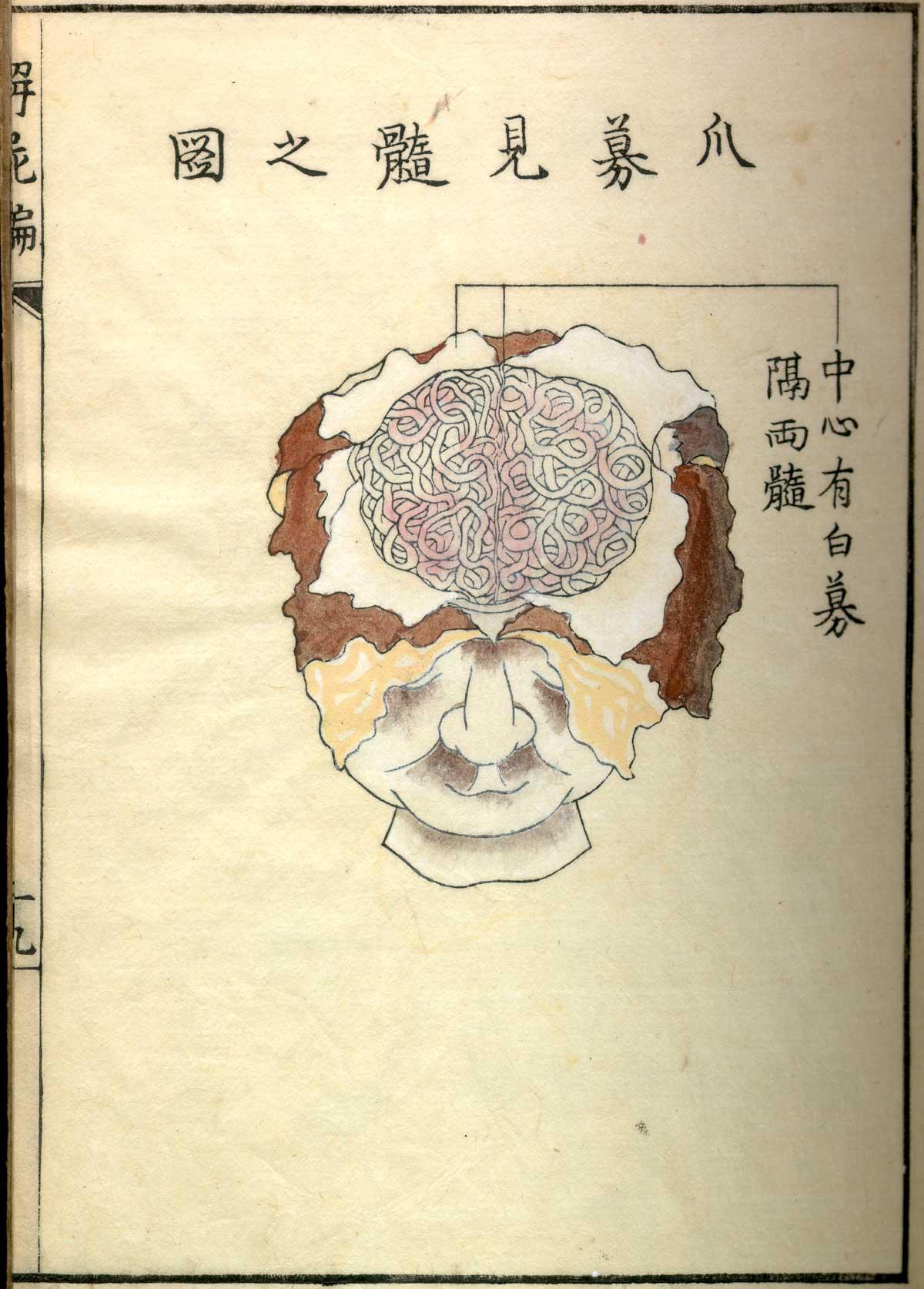 anatomia 26
