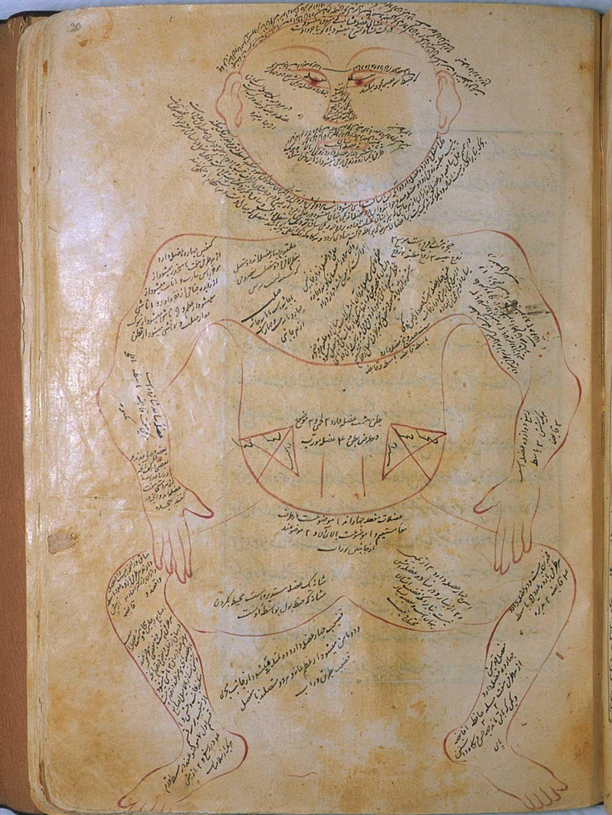 anatomia 27