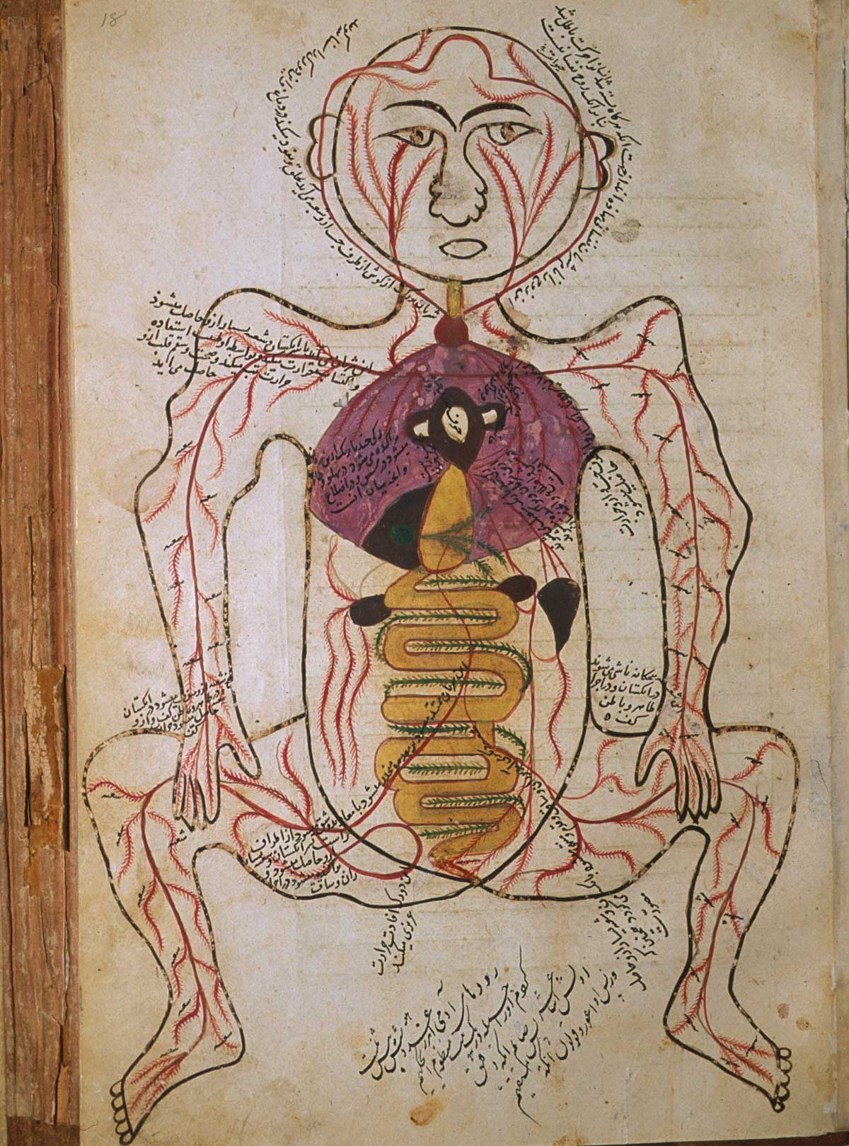 anatomia 28