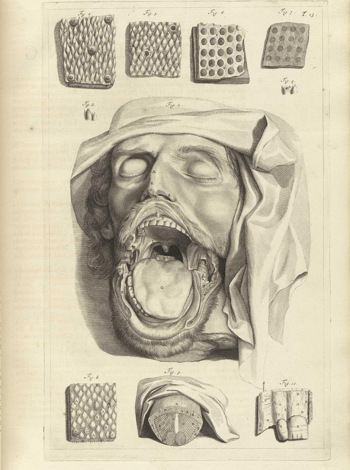 anatomia 6