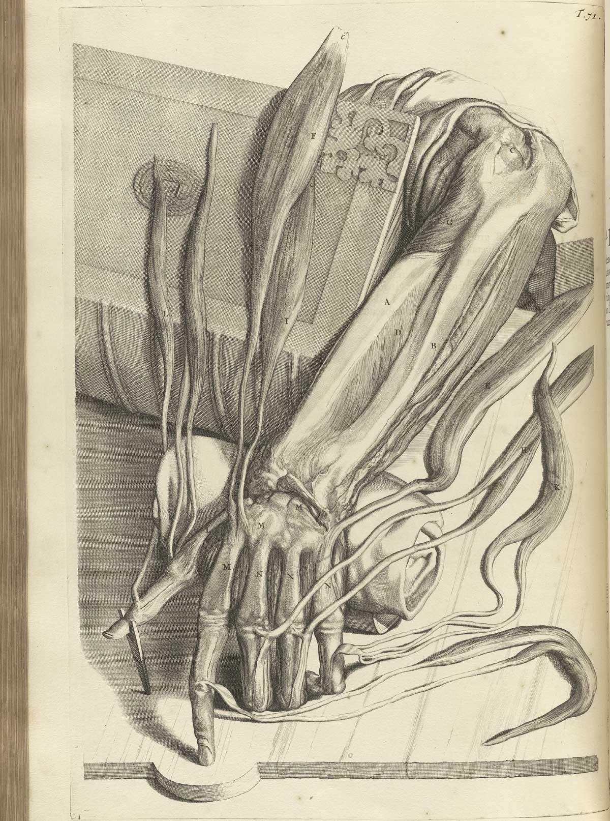 anatomia 8