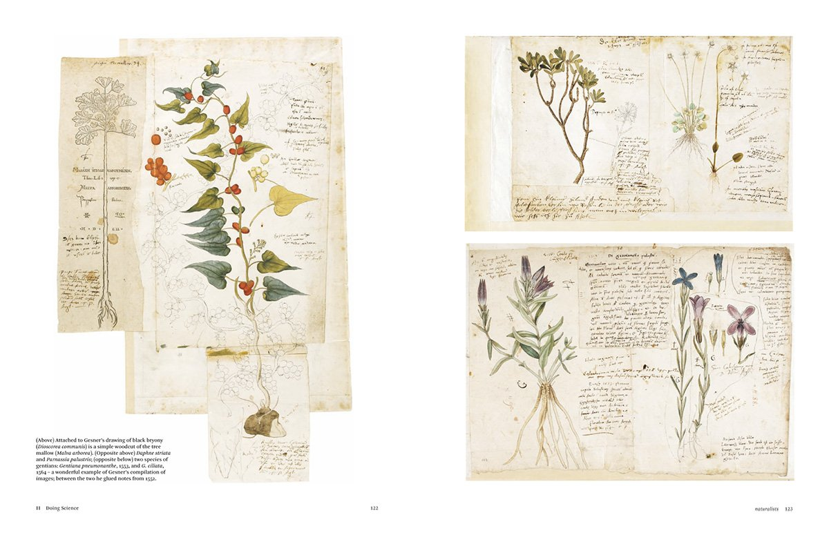 botanical sketchbooks 7