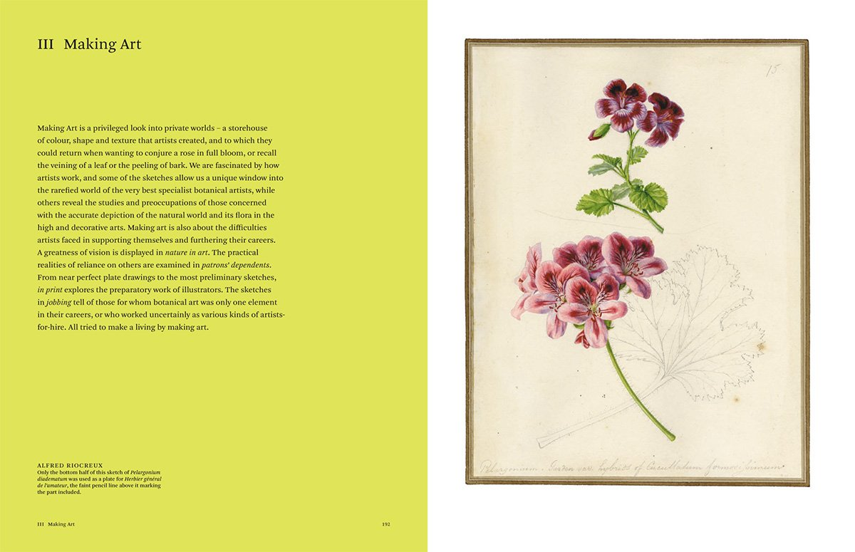 botanical sketchbooks 9
