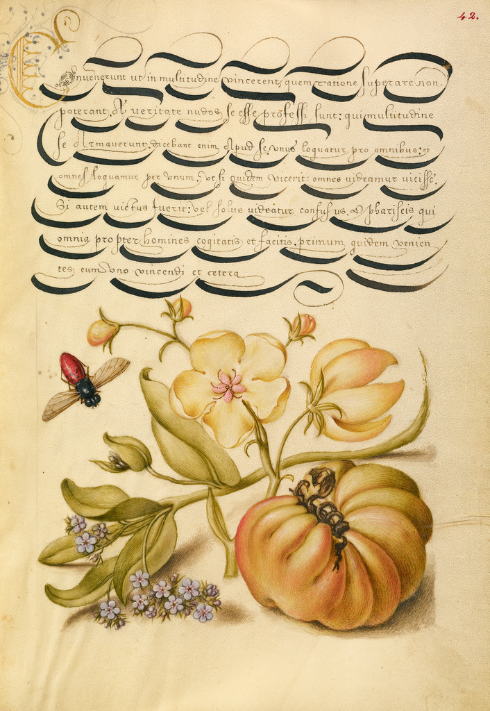 Mira calligraphiae monumenta 11