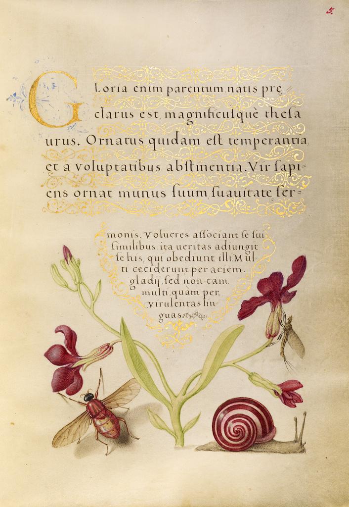 Mira calligraphiae monumenta 2