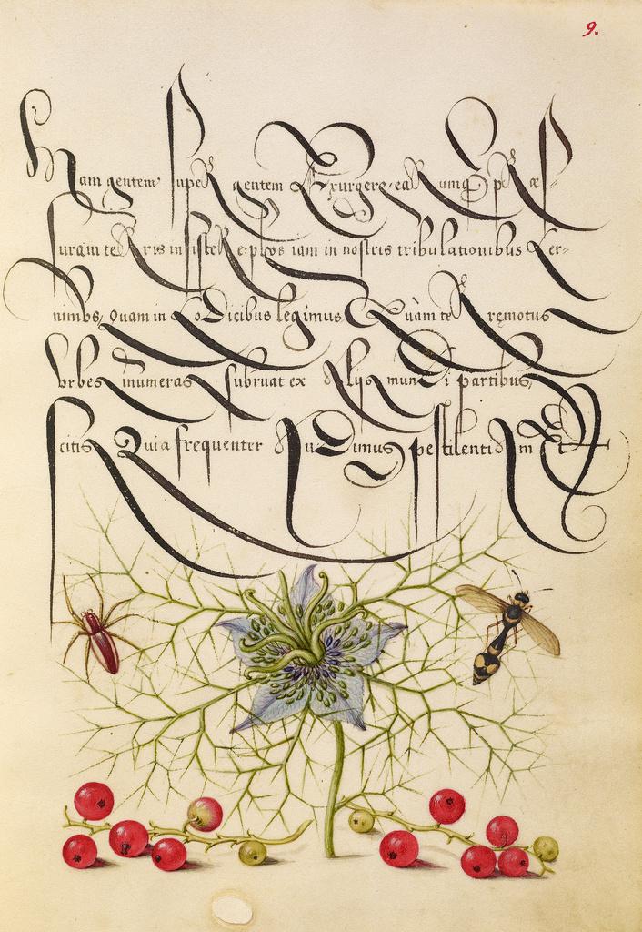 Mira calligraphiae monumenta 3