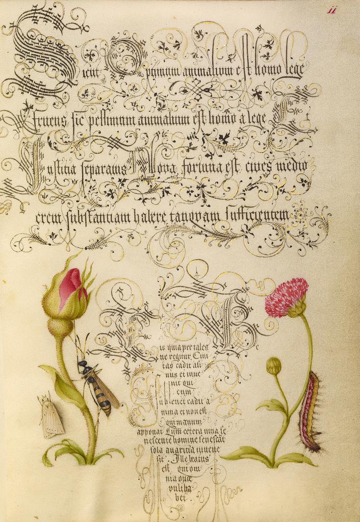 Mira calligraphiae monumenta 4