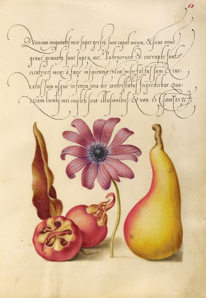 Mira calligraphiae monumenta 5