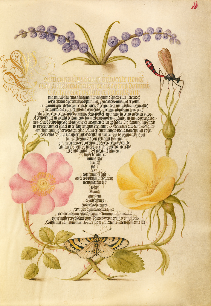 Mira calligraphiae monumenta 6