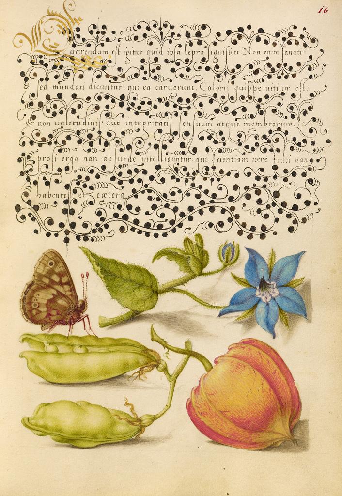 Mira calligraphiae monumenta 7