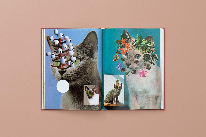 catsplants 07 copy