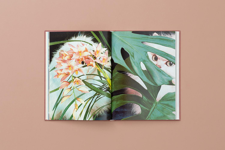 catsplants 08 copy