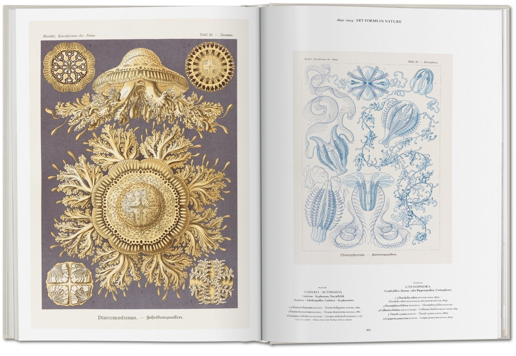 The Art and Science of Ernst Haeckel 12