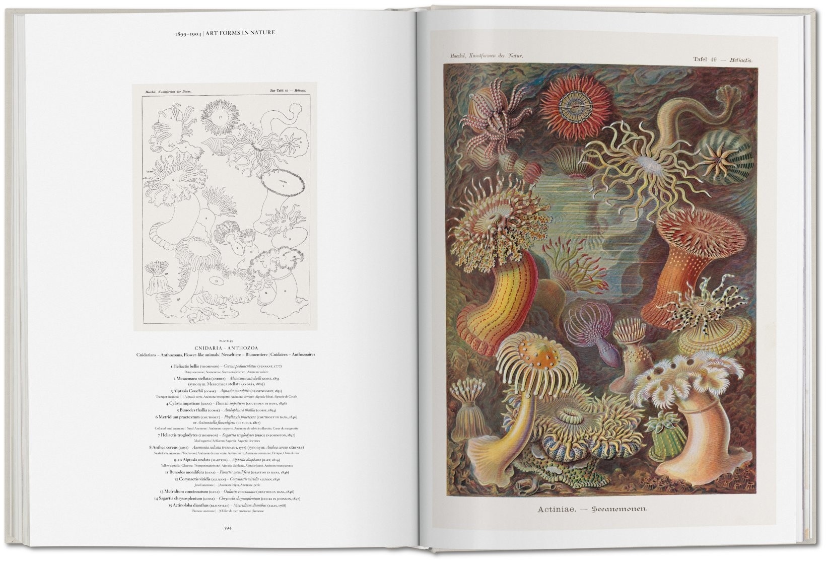 The Art and Science of Ernst Haeckel 13