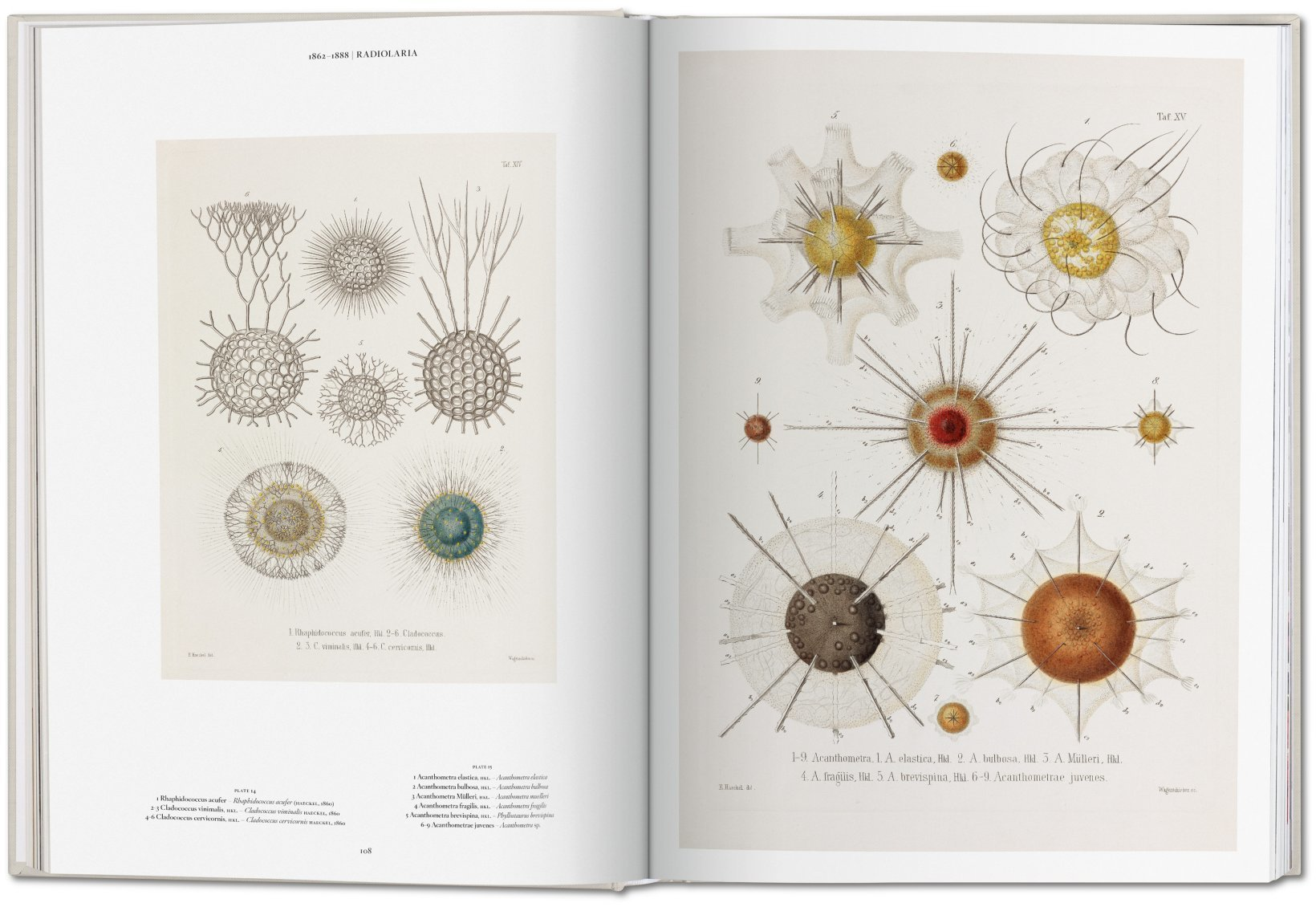 The Art and Science of Ernst Haeckel 5